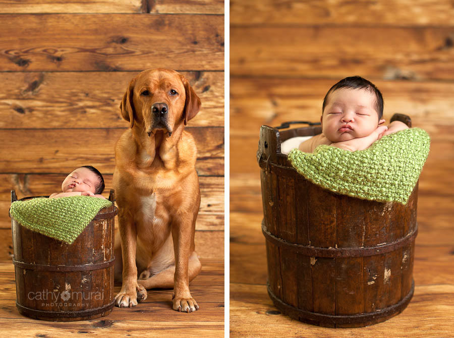 Newborn with a Family Dog Portrait | Los Angeles (Alhambra) Newborn and Pet Photographer, Cathy Murai Photography
