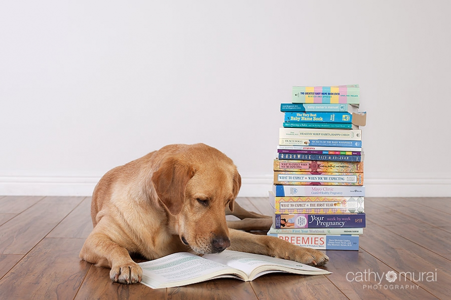 A yellow labrador, who is expecting a baby sister, reading many books about pregnancy, newborn, and child care