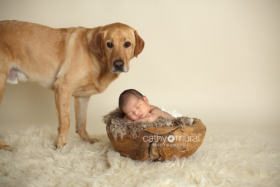 Asian 2 weeks newborn baby girl posing and sleeping on brown furry prop / blanket inside the wooden puzzled bowl on flokati rug, in front of tan, ivory background with a family dog. Alhambra, San Gabriel Valley, Los Angeles, CA  Studio Newborn Photographer, Cathy Murai Photography