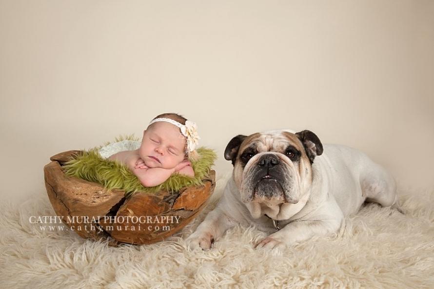 Precious Newborn Baby Girl and the family dog (bulldog) Los Angeles. Pasadena, Newborn photographer, Cathy Miurai Photography