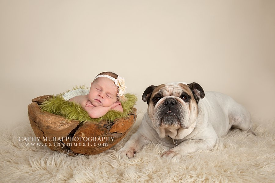 Precious newborn baby girl and the family dog bulldog los angeles pasadena
